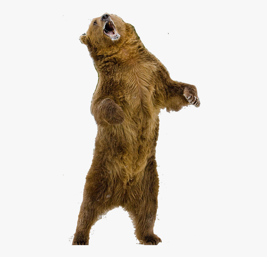Grizzly Standing Bear Clipart - Standing Grizzly Bear Png, Transparent Clipart