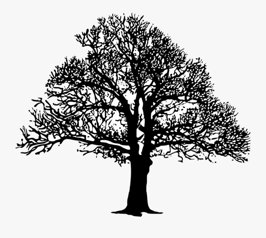 Plant,leaf,monochrome Photography - Oak Tree Silhouette, Transparent Clipart