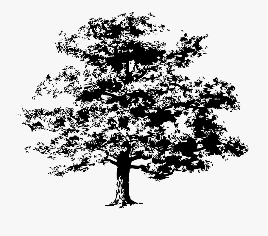 Oak Tree Png Vector - Oak Tree Vector Art Free, Transparent Clipart