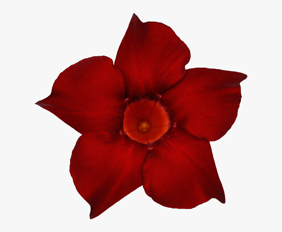 Transparent Dark Flowers Png - Desert Rose, Transparent Clipart