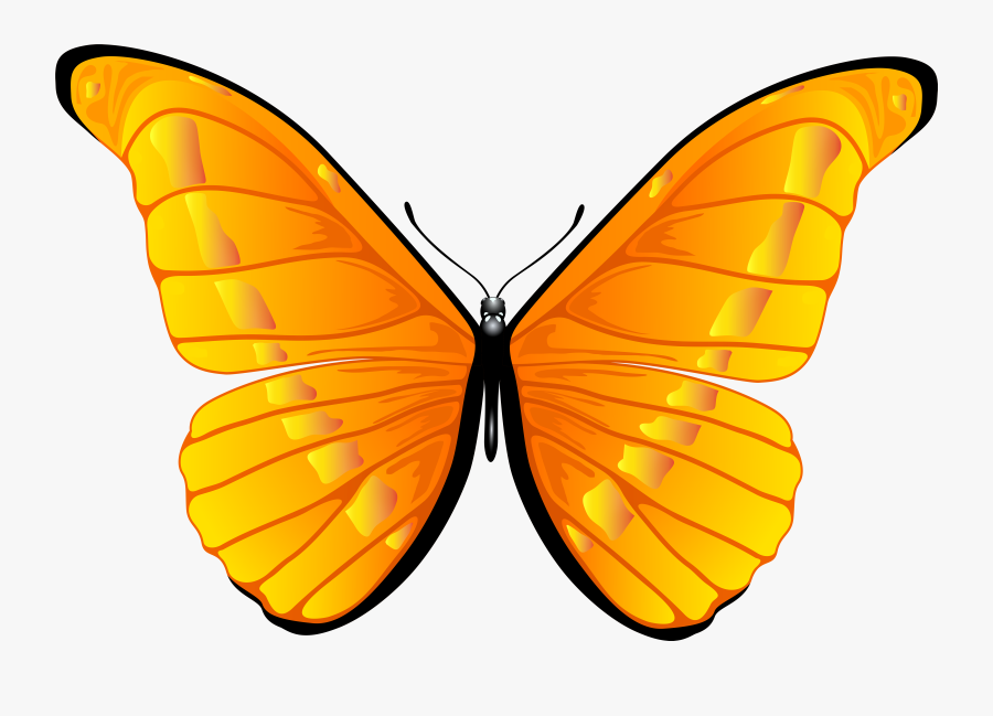 Orange Butterfly Png Clip Art Image - Clipart Butterfly, Transparent Clipart