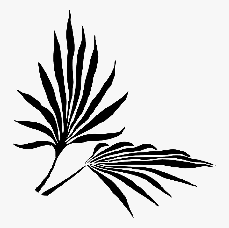 Palm Fronds Png Search Results Landscaping Gallery - Palm Frond Clip Art, Transparent Clipart