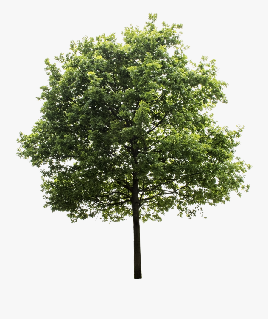 Clip Art Graphics Resources Recursos Gr - Transparent Background Tree Png, Transparent Clipart