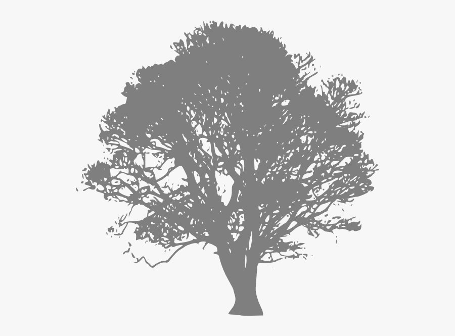 Transparent Large Tree Png - Live Oak Tree Clip Art, Transparent Clipart