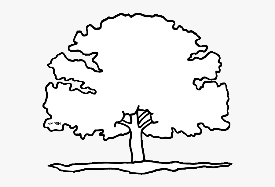 Resume Clipart Red Oak Tree - Maryland State Tree Drawing, Transparent Clipart