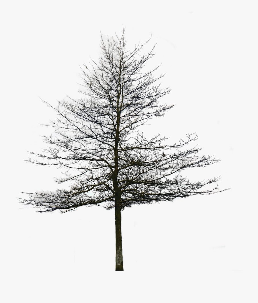 Transparent Oak Tree Clipart Black And White - Architectural Tree Background Png, Transparent Clipart