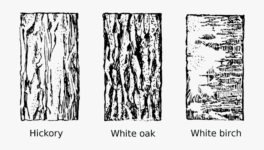 Banner Free Download - Tree Bark Line Drawing, Transparent Clipart