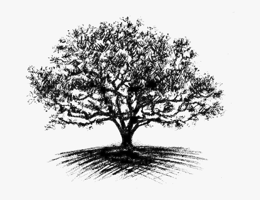 Clip Art Oak Tree Drawing - Heart Of The Tree, Transparent Clipart