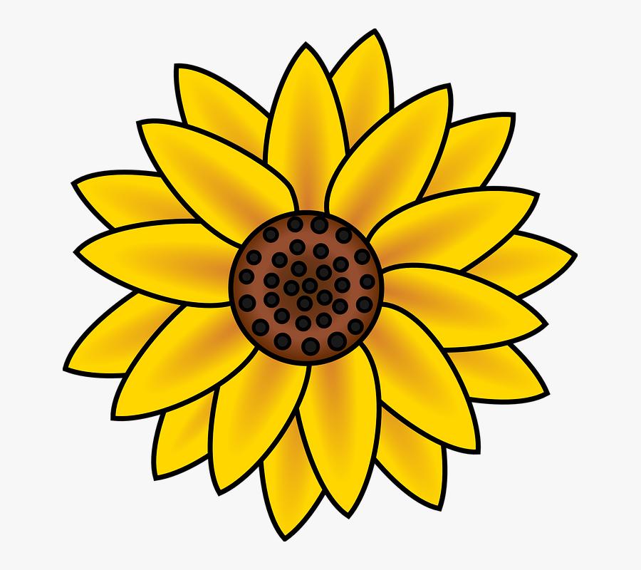 Gambar Bunga Matahari Animasi Easy To Draw Sunflowers Free