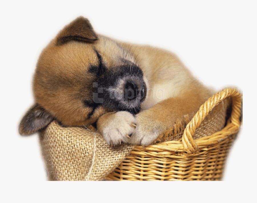 Puppy Clipart Png - Real Cute Animal Png, Transparent Clipart
