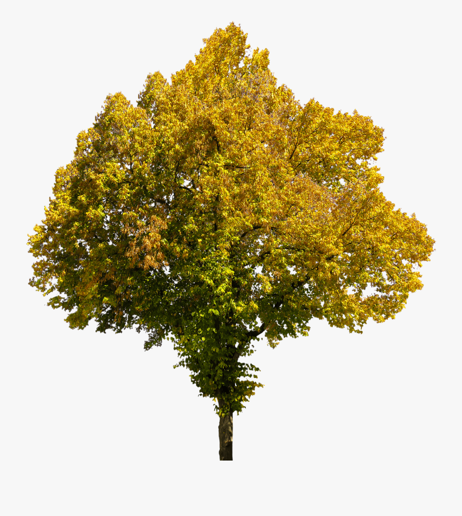 Autumn, Time Of Year, Tree, Leaves, Png, Isolated - Autumn Trees Transparent Background, Transparent Clipart