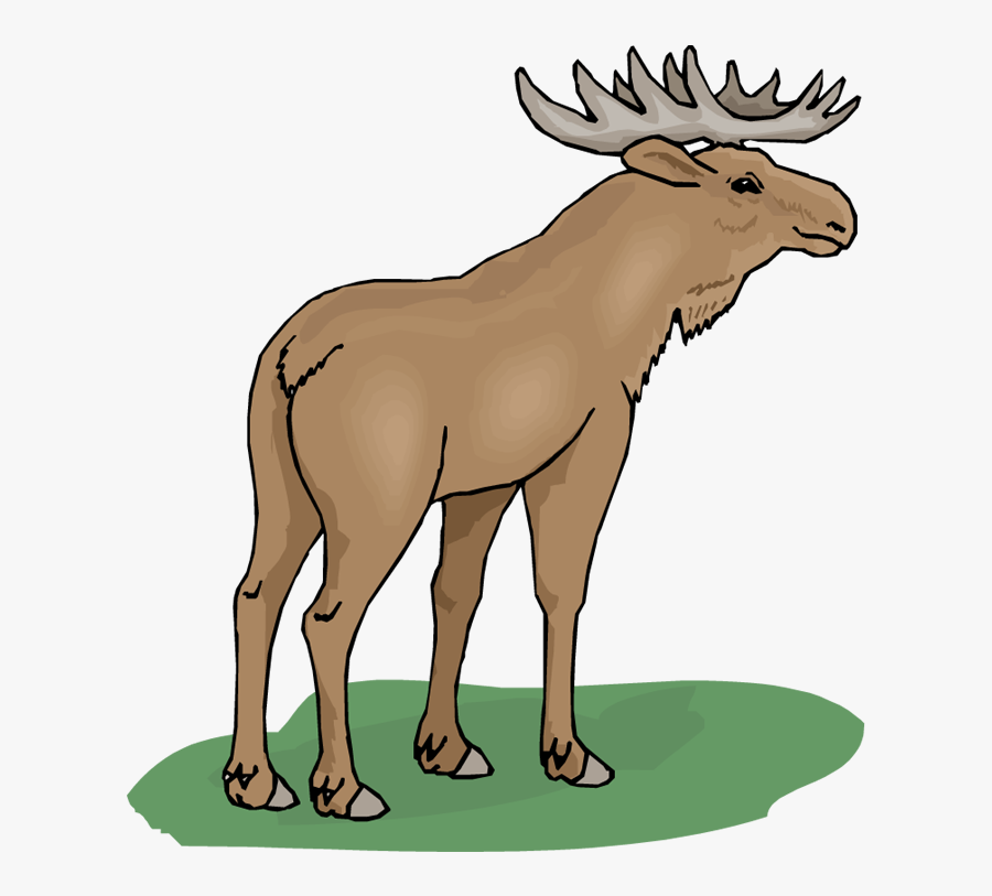 Funny Moose Clipart - Moose Png Clipart, Transparent Clipart
