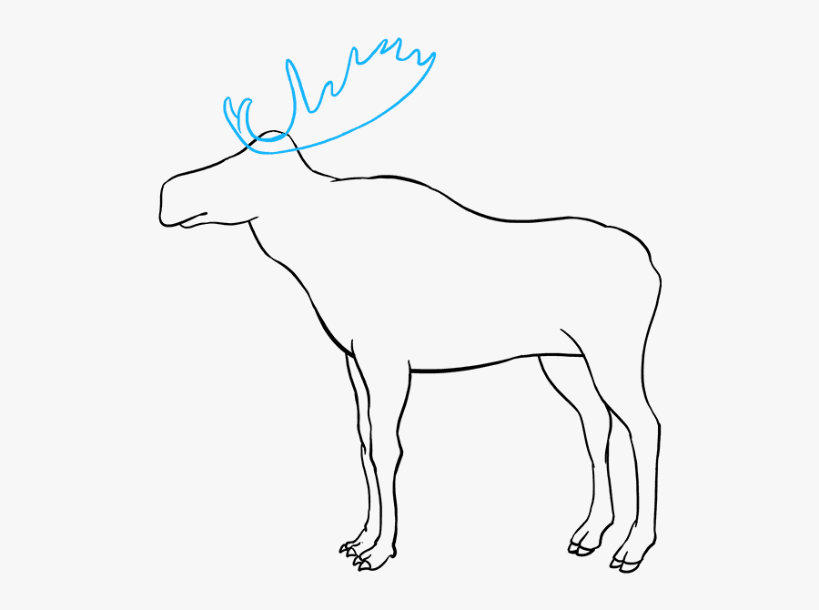 How To Draw Moose - Moose Drawing, Transparent Clipart