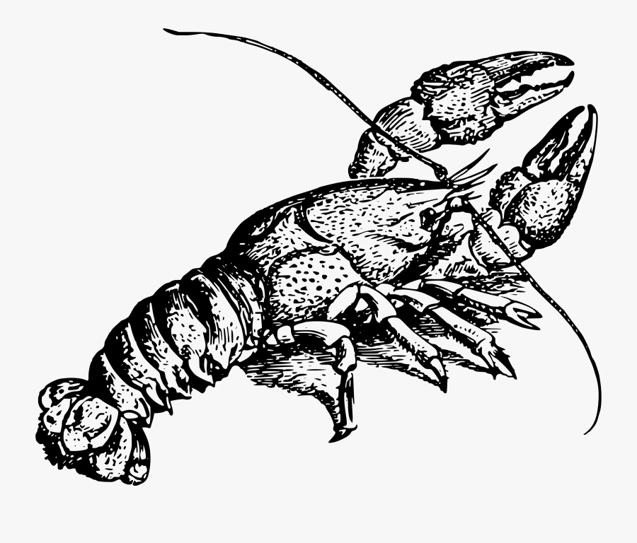 Art,monochrome Photography,fish - Crayfish Drawing, Transparent Clipart