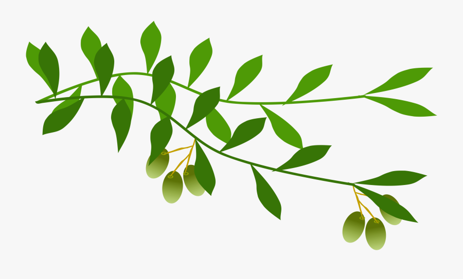 Olive Branch Clip Art - Olive Branch Free Clip Art, Transparent Clipart