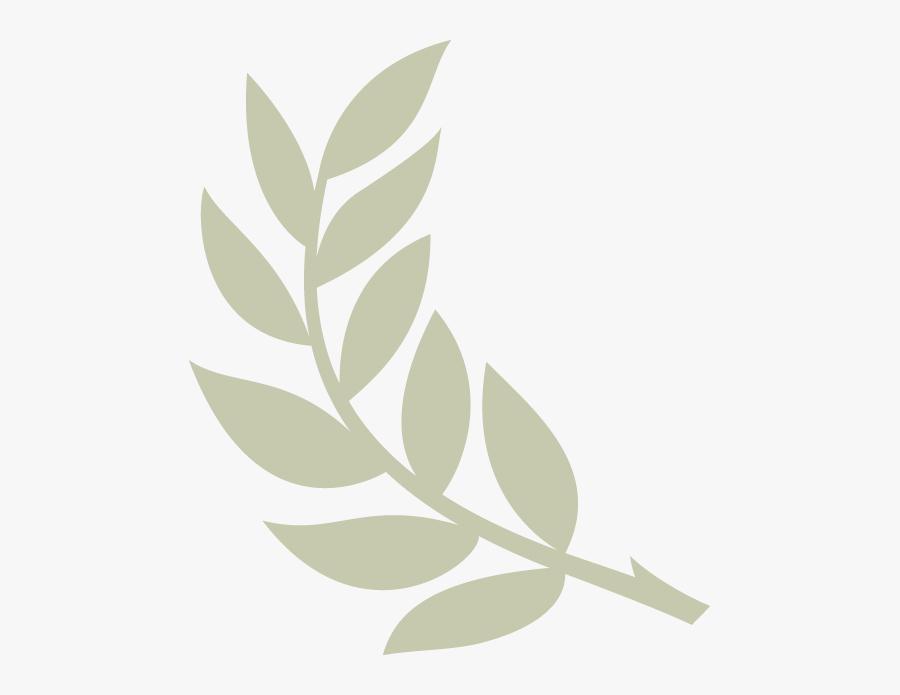 Olive Branch Transparent Background, Transparent Clipart