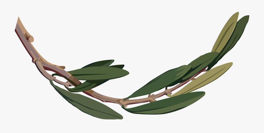 Botany,plant,flower - Clip Art Olive Tree Leaves Png, Transparent Clipart