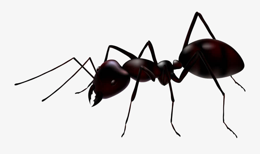 Ant Clipart Transparent Backg - Ant Transparent Background, Transparent Clipart