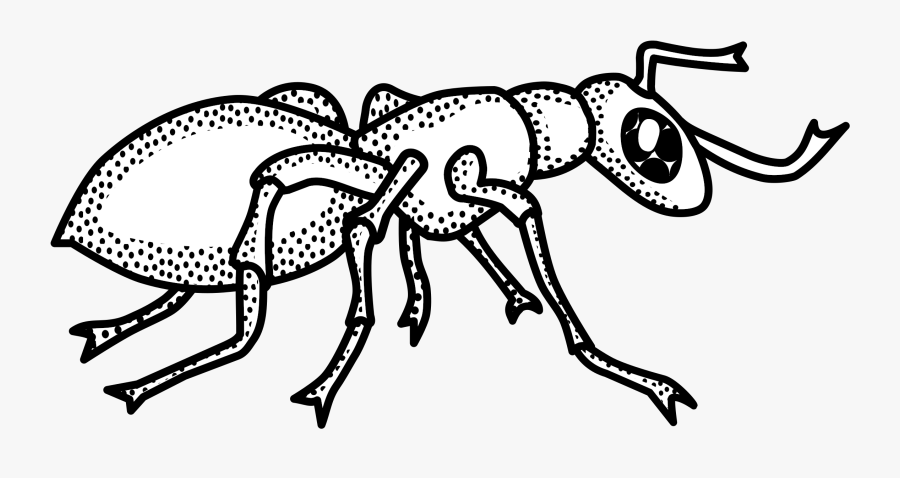 Clip Art Clipart Line Drawing Cute - Clip Art Black And White Ant, Transparent Clipart