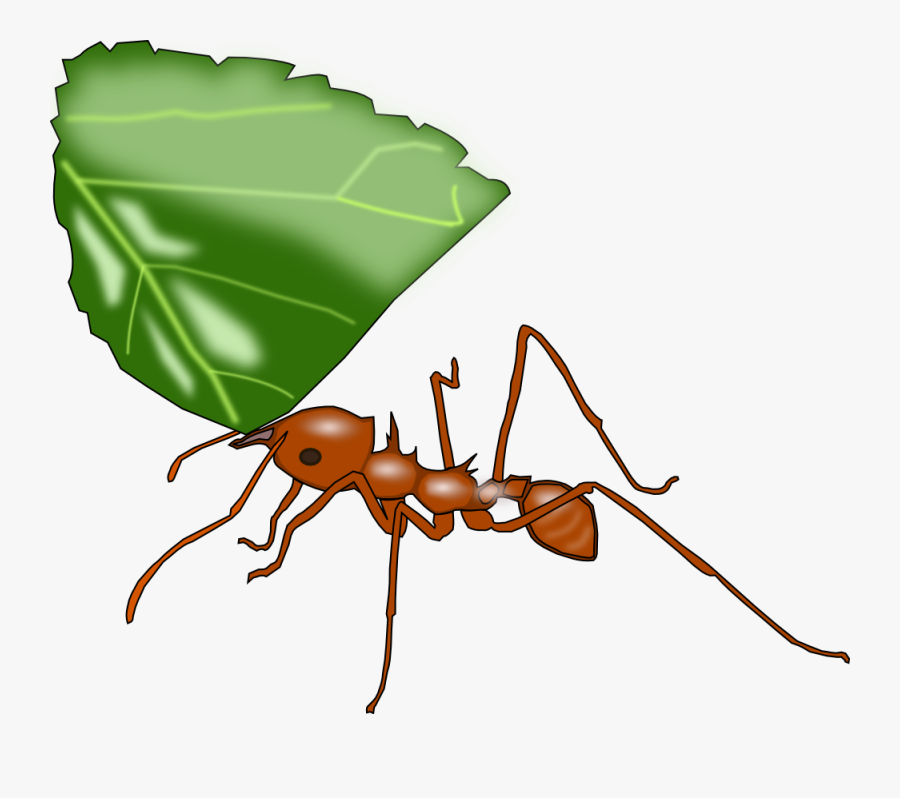 Atta Ant - Ant Carrying Leaf Clip Art, Transparent Clipart