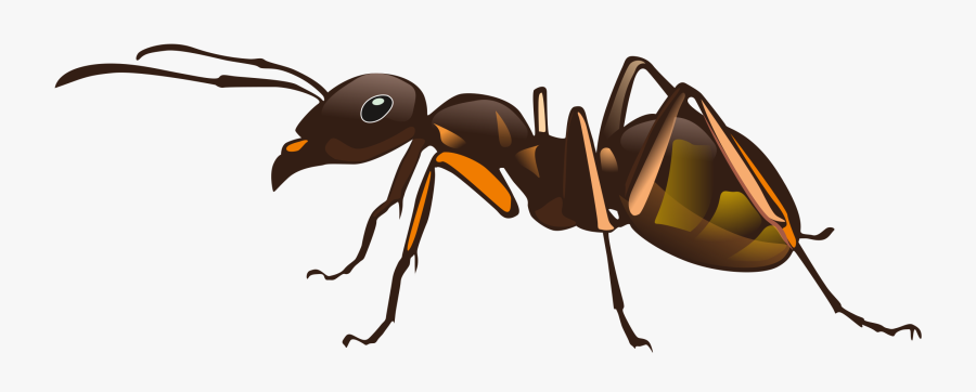 Red Imported Fire Ant Insect Pest Control - Transparent Ant, Transparent Clipart