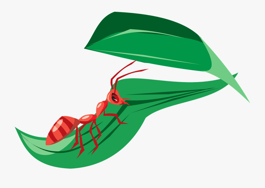 Ant In Leaf Clipart, Transparent Clipart