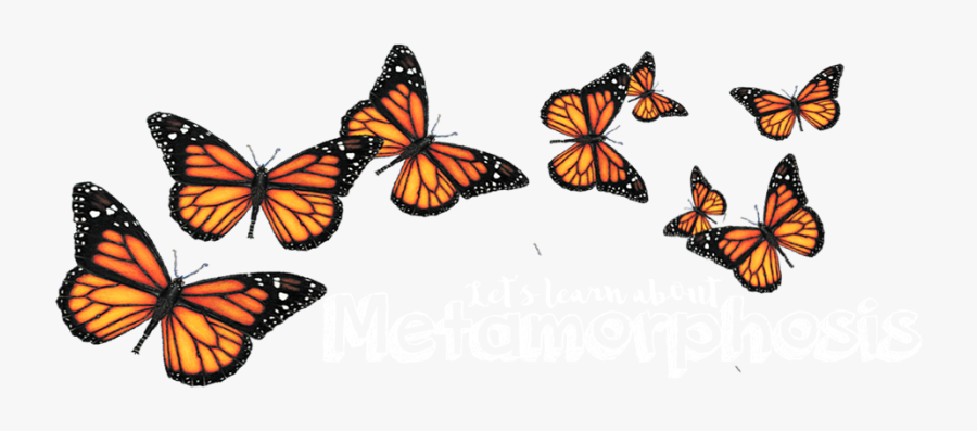 Butterfly Portable Network Graphics Clip Art Insect - Transparent Background Monarch Butterfly Clipart, Transparent Clipart