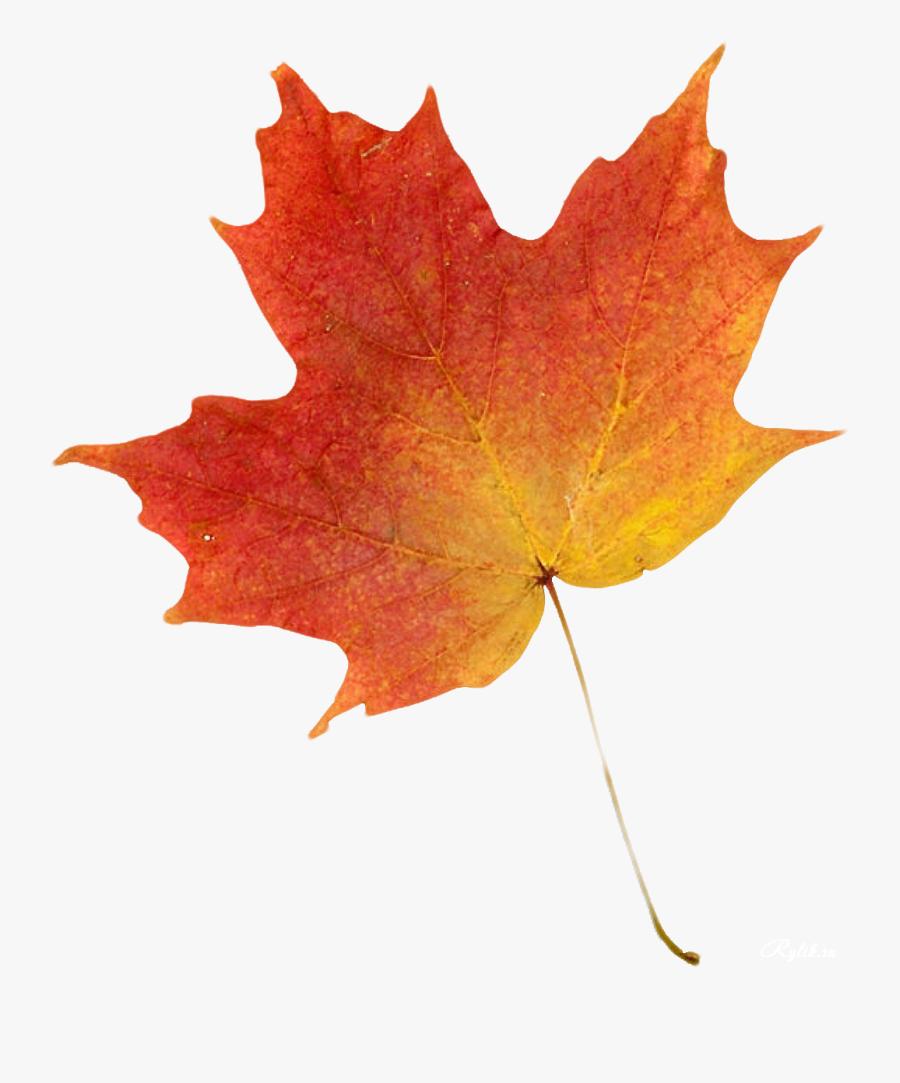 Autumn Leaf Color Clip Art - Maple Leaf Colour Drawing, Transparent Clipart