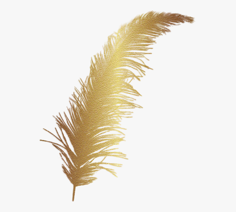 #gold #goldfeather #feather #decor #decals #decoration - Transparent Gold Feather Png, Transparent Clipart