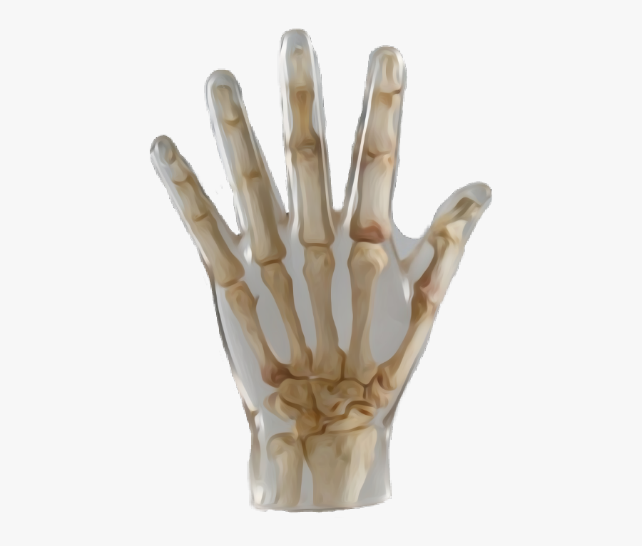 Hand Skeleton Bones Biology Nature - X-ray, Transparent Clipart