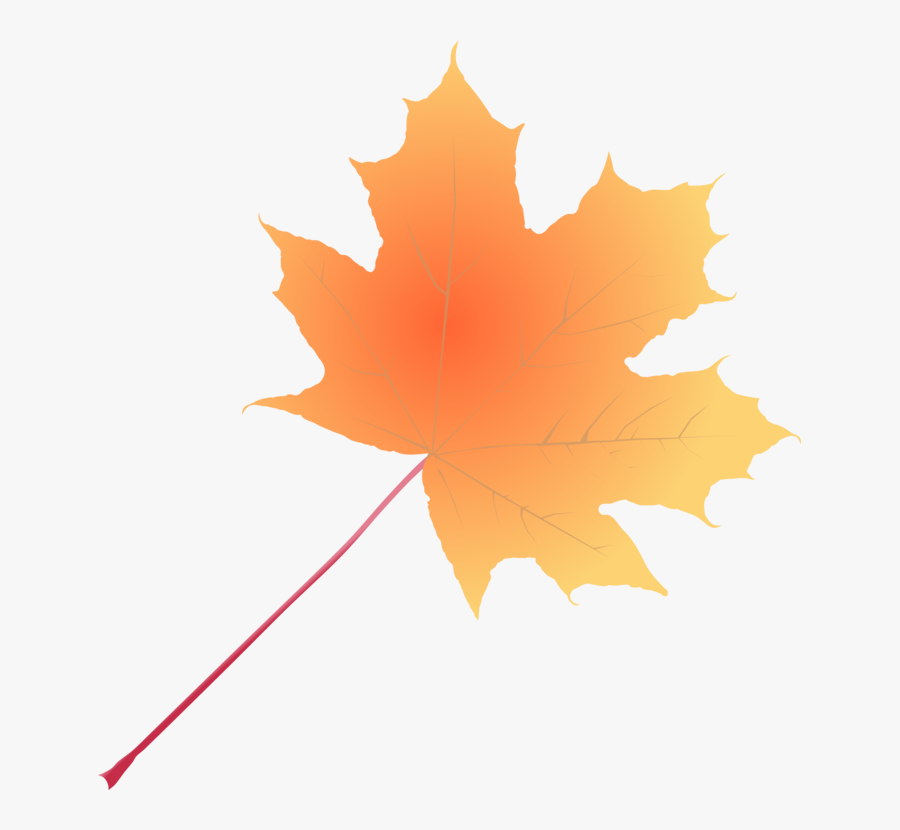 Plant,leaf,tree - Maple Leaf, Transparent Clipart