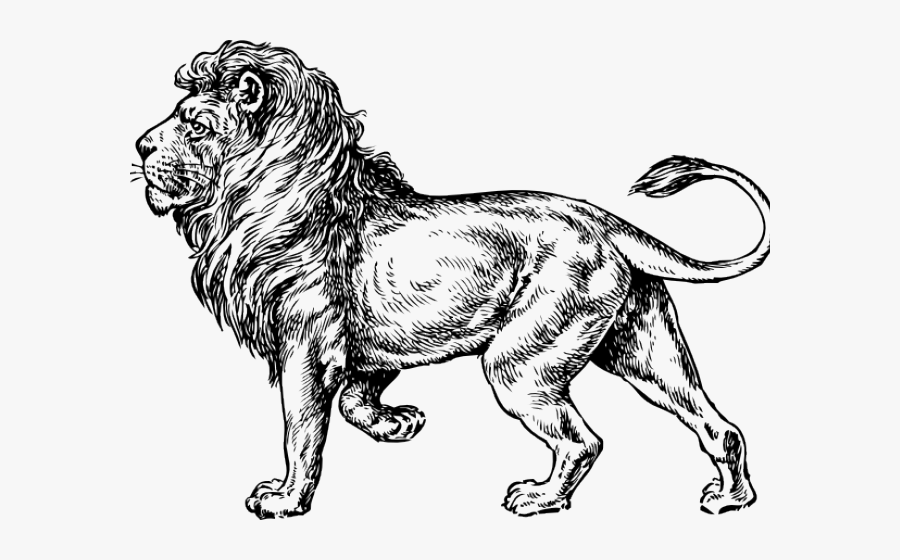 Lion Drawing Png, Transparent Clipart