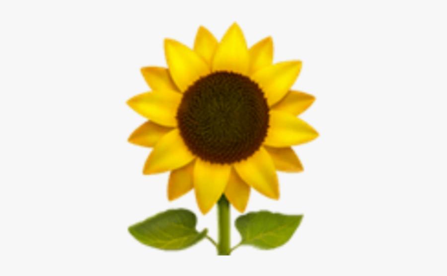 #freetoedit #edit #emoji #apple #ios #iphone #sunflower - Sunflower Emoji Png, Transparent Clipart
