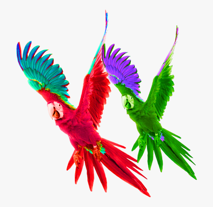 Free Flying Parrot Clipart, Download Free Clip Art, Free Clip Art on Clipart  Library