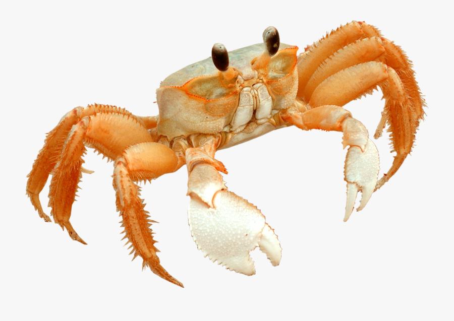 Transparent Little Mermaid Sebastian Png - Transparent Crab, Transparent Clipart