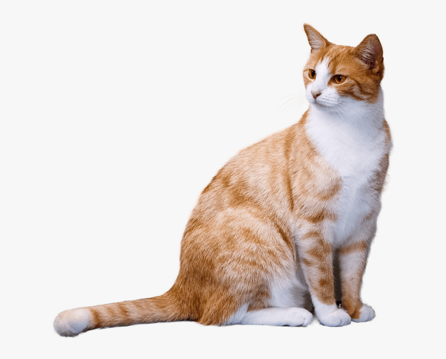 Transparent Orange Tabby Cat Clipart - Transparent Background Cat Png, Transparent Clipart