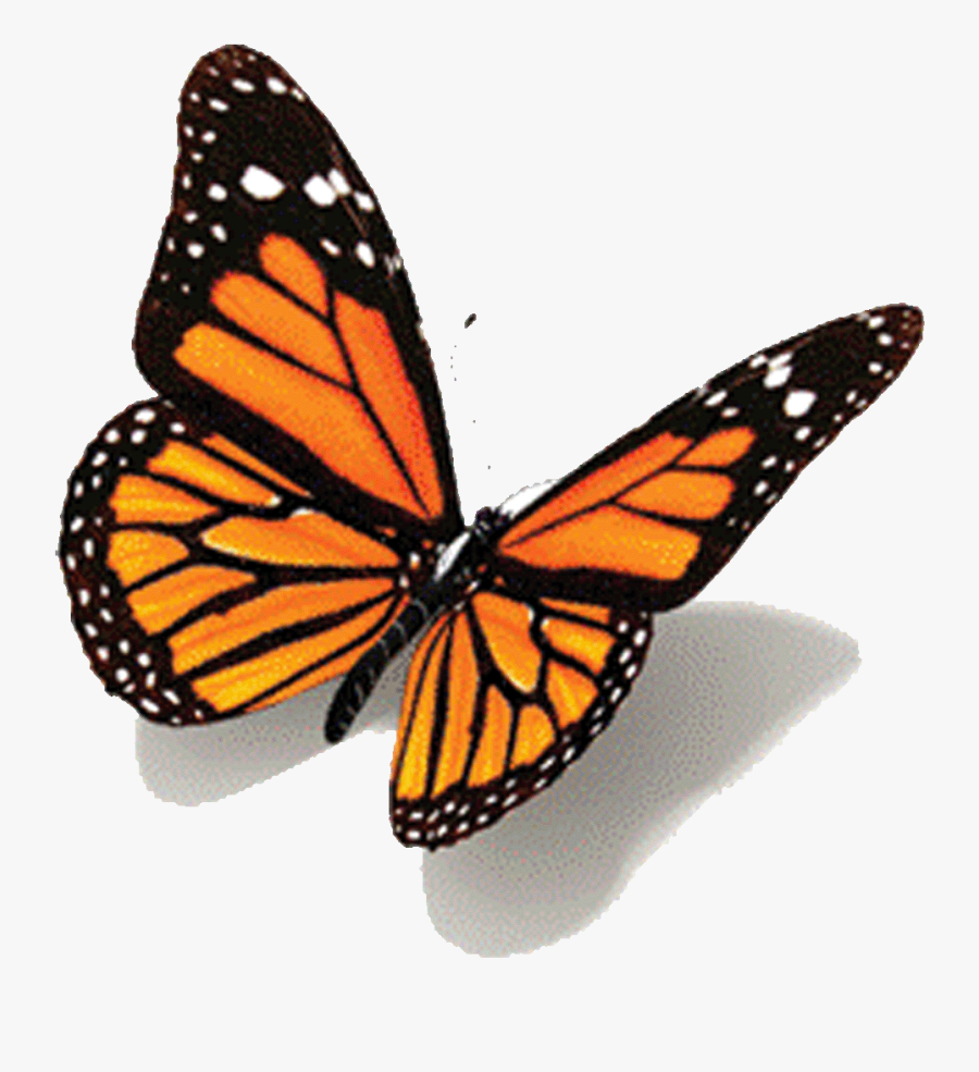 Animated Images Of All Non Butterflies Random - 3d Butterfly Drawing, Transparent Clipart