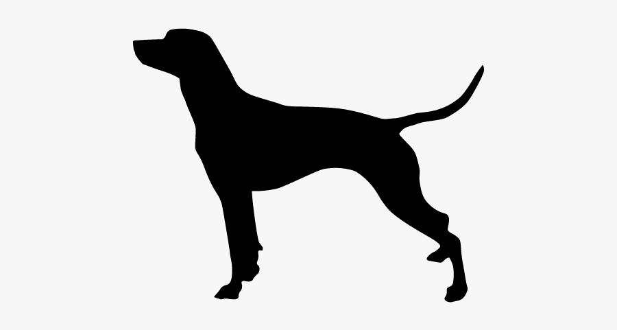 Rat Terrier Smooth Fox Terrier Scottish