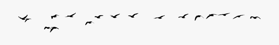 Silhouette Birds Flying Png, Transparent Clipart