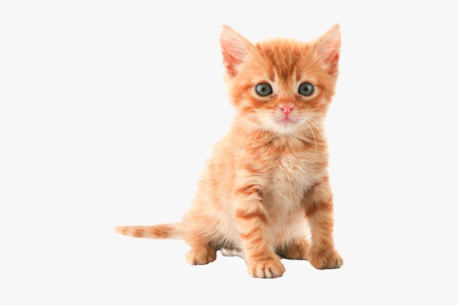 Kitten Tabby Cat Clip Art - Cute Cat Transparent Background, Transparent Clipart