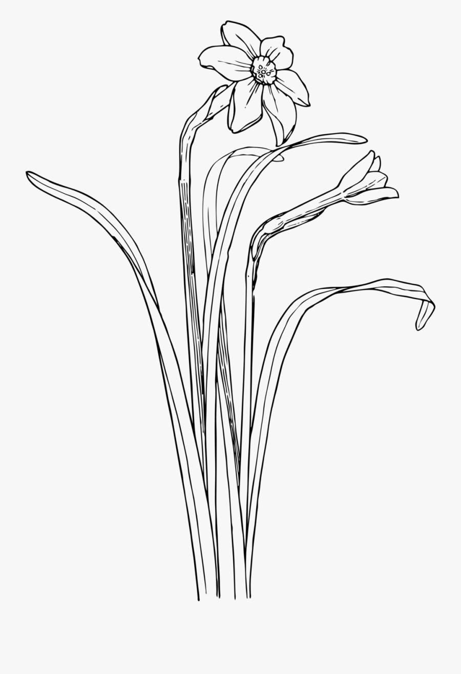 Plants Flower Bush Drawing, Transparent Clipart