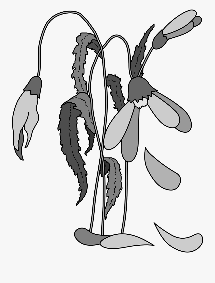 Higher Praise Is Your 1 Christian Resource Specializing - Dead Flowers Drawing Simple, Transparent Clipart