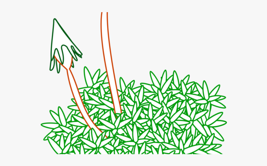 Moss Plant Line Drawing, Transparent Clipart