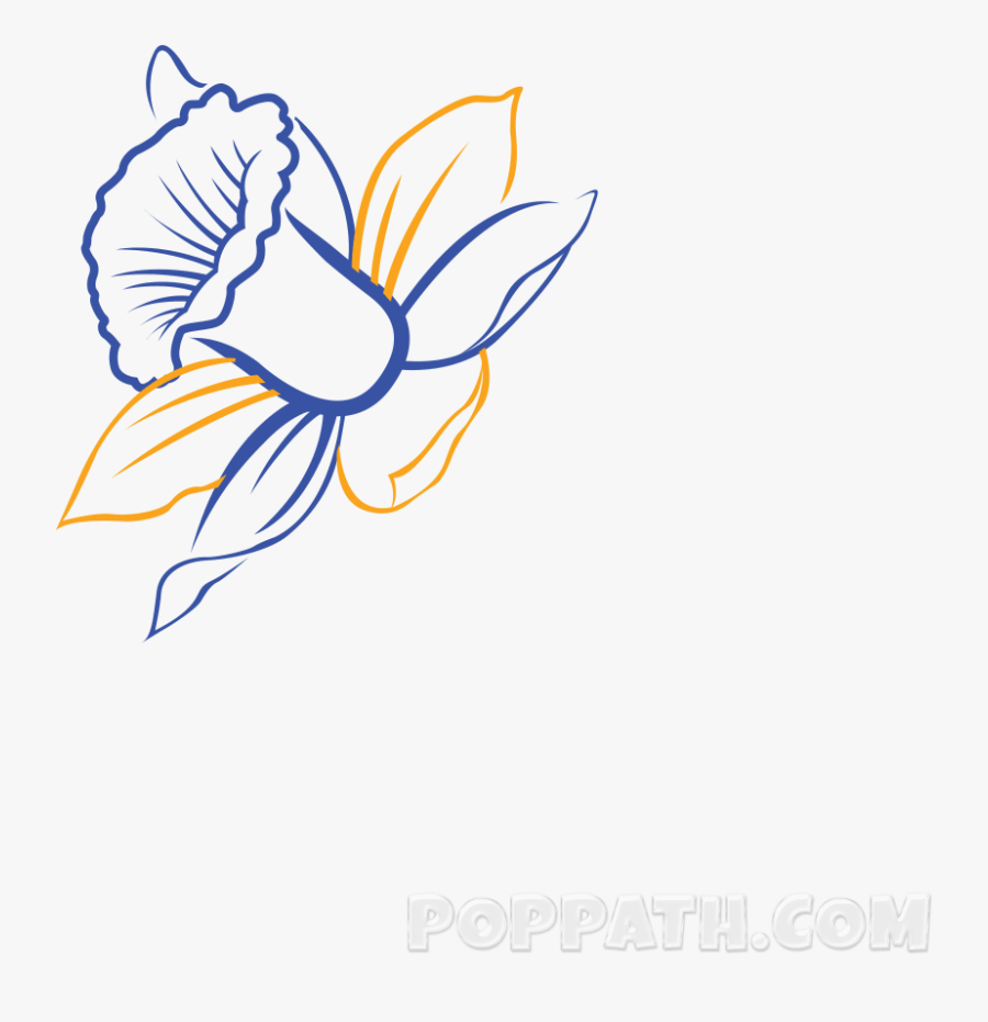 Daffodils Drawing Sketch - Daffodil Drawing Art, Transparent Clipart