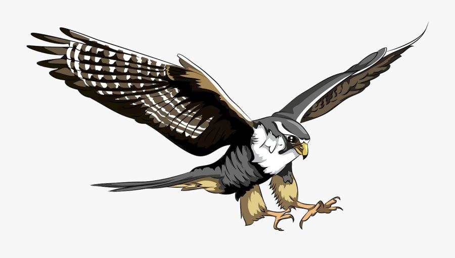 Peregrine Falcon Falcon Vector, Transparent Clipart
