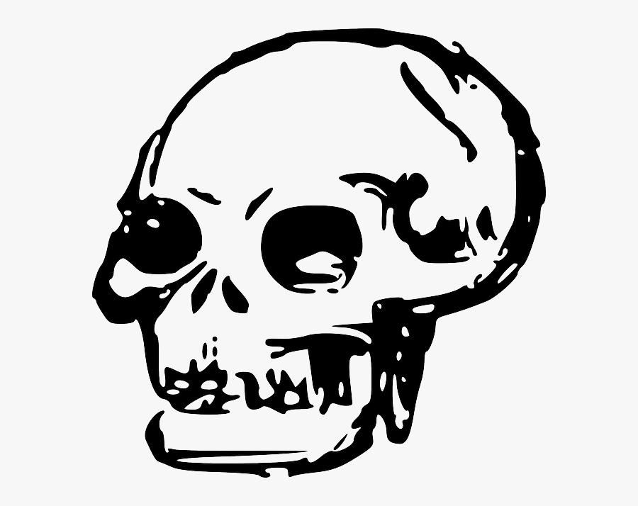 Head, Dead, Skull, Human, Bones, Skulls - Skull Transparent Clip Art, Transparent Clipart