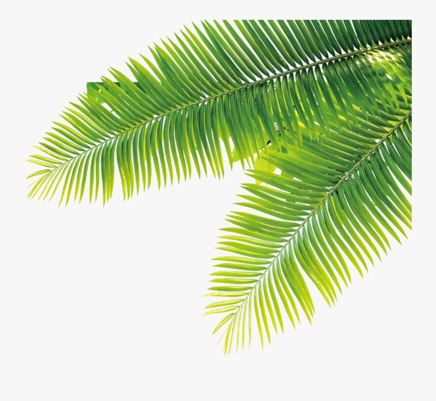 Tropical Tropics Plant Computer File Free Hq Image - Tropical Plant Transparent Background, Transparent Clipart