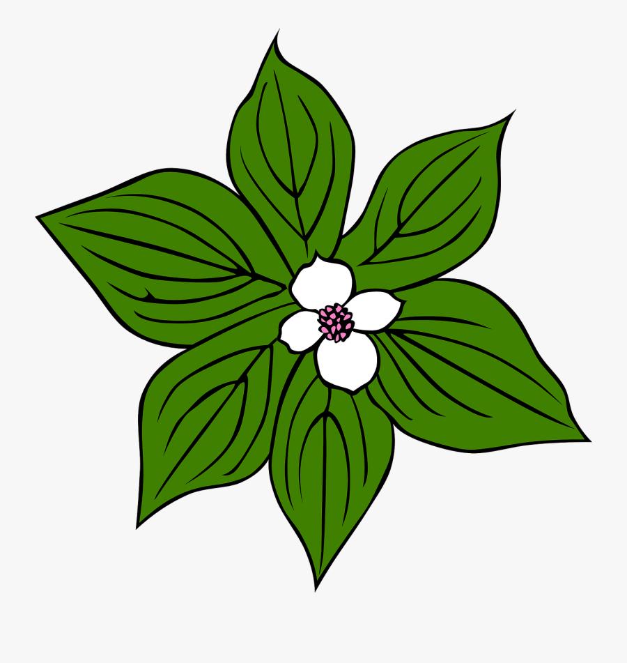 Rainforest Clipart Grass Jungle - Tropical Rainforest Plants Drawings, Transparent Clipart