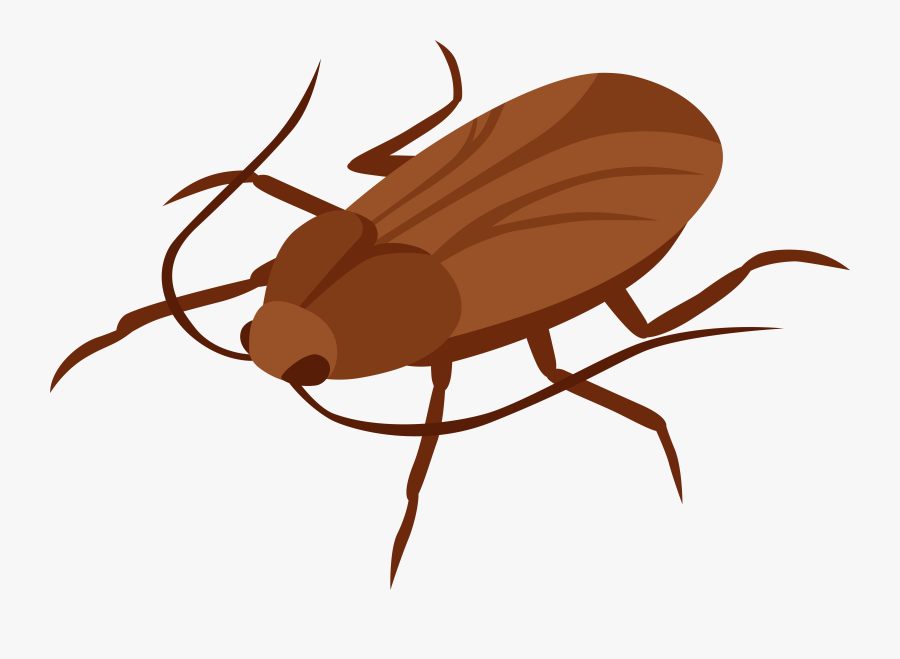 Cockroach Png Clip Art - Black And White Clipart Of Cute Cockroach, Transparent Clipart