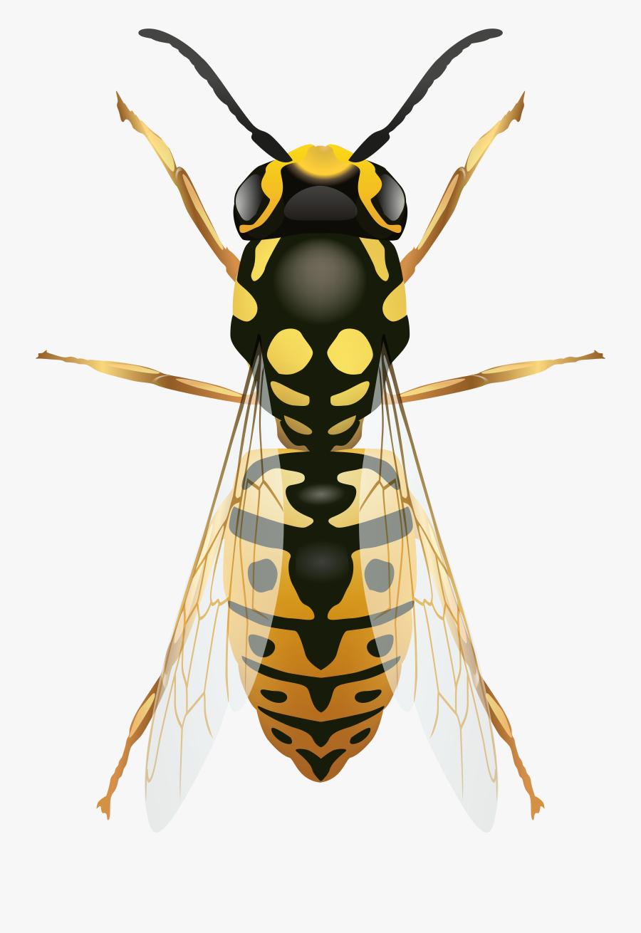 Wasp Png Clip Art - Vergleich Biene Und Hornisse, Transparent Clipart